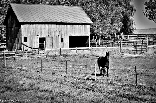 Barn Yard Horse
