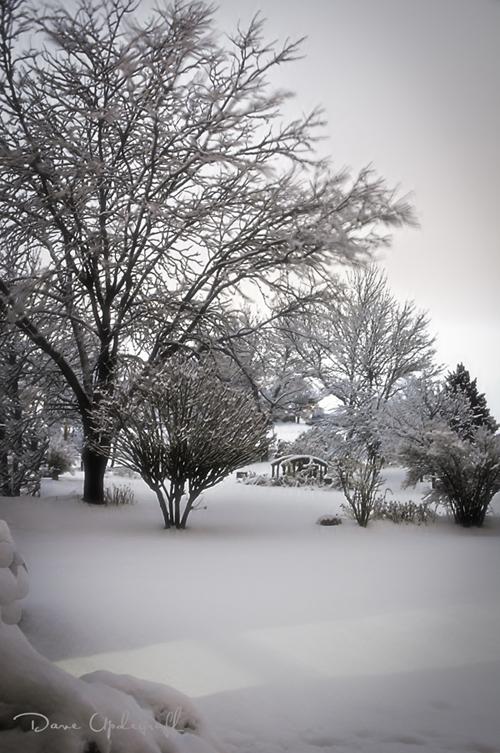 Back Yard Snow - 2010