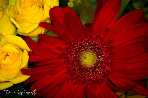 Jeanne's Flowers #5