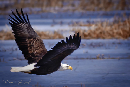 Eagle Fly Over
