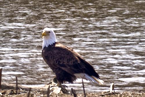 Sabula Eagles - 2