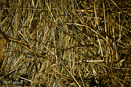 Just some dead grass