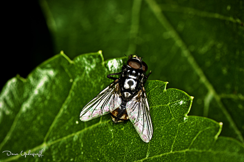A lonely Fly