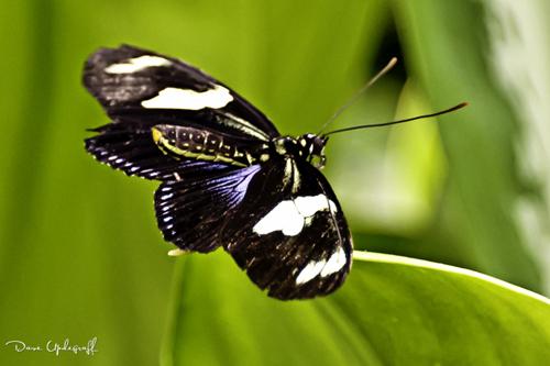 A Butter Fly