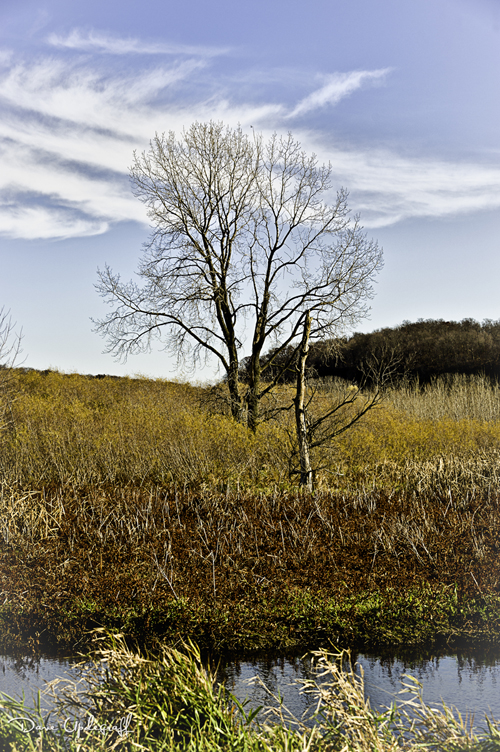A tree at Green Island