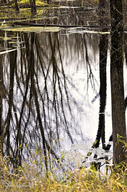 Reflection at Green Island