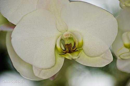 Flower from Reiman Gardens