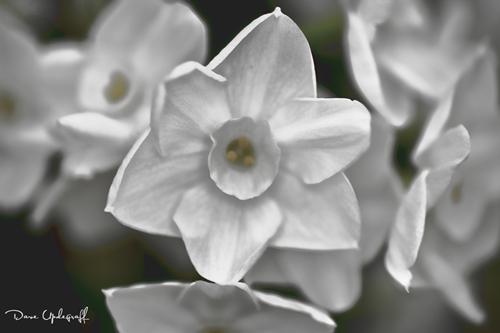 Flowers from Reiman Garden