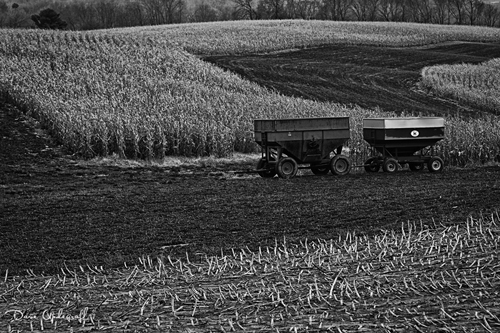Wagons in the field