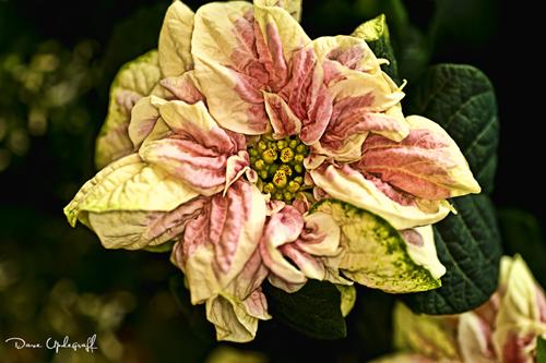 Reiman Gardens Flower