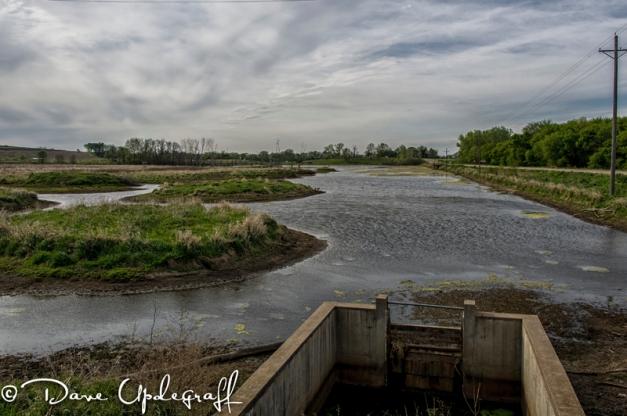 Hurstville Duck Pond