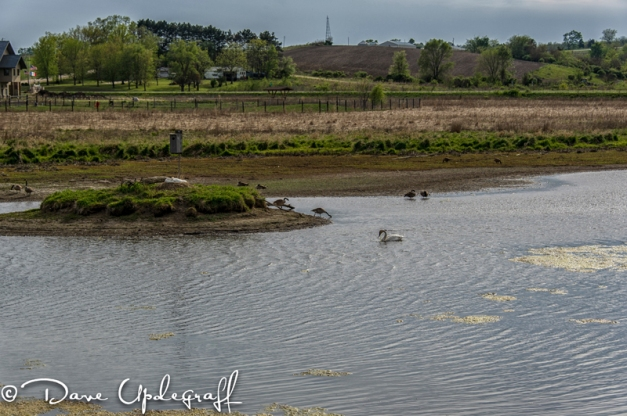 Low water level at the Duck Pond