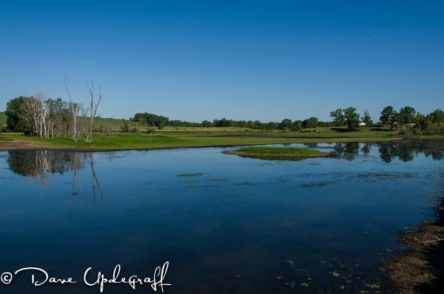 Duck Pond 06-08-2012