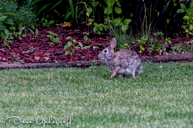 Just a lowly Rabbit