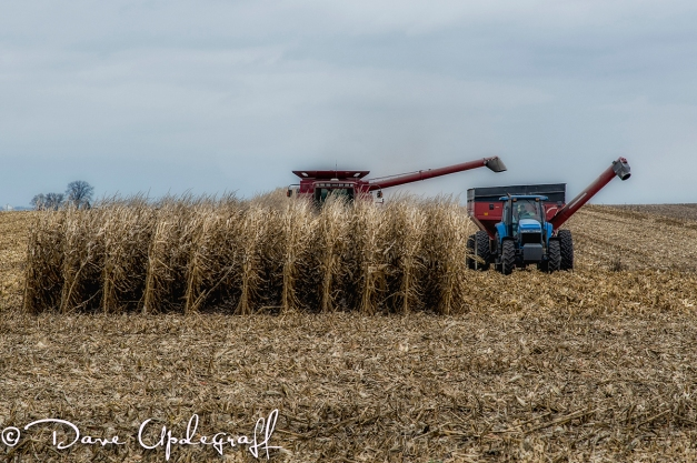 Last of the Corn Harvest