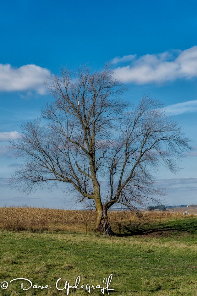 Barren Tree Alone in a Field