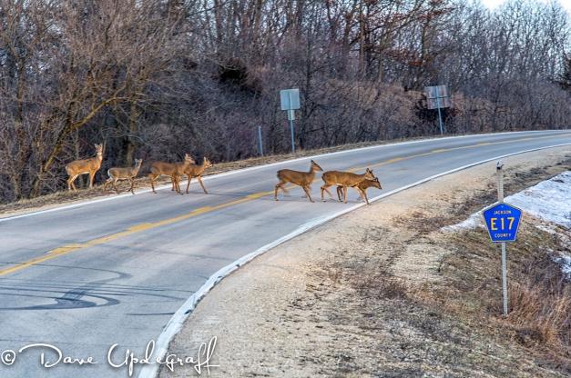 Seven Deer Cross The  Road