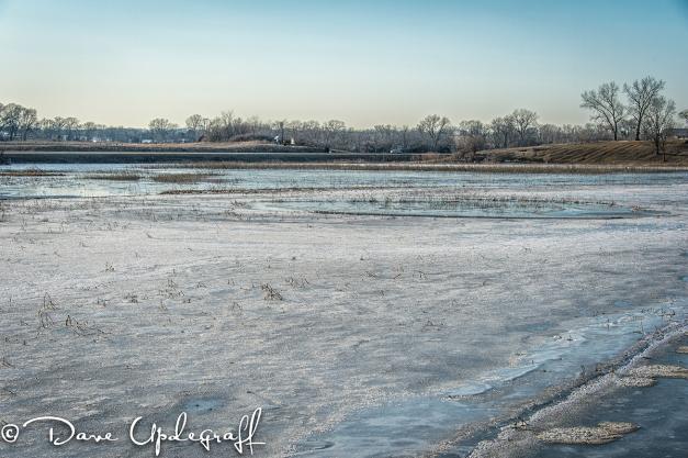 Water in the Hurstville Marsh Again.