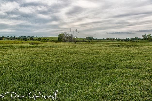 Hurstville Duck Pond 08/31/2012