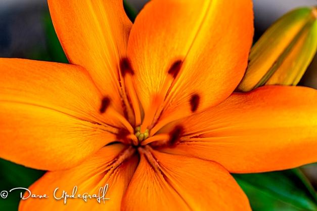 Flower leaves in focus