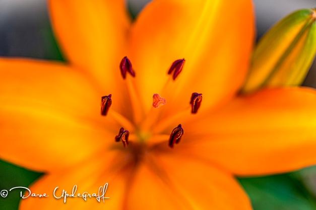 Flower Pestles in focus