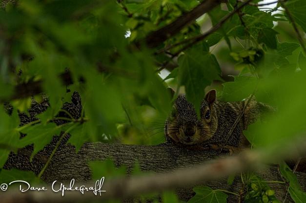 The ever popular Squirrel