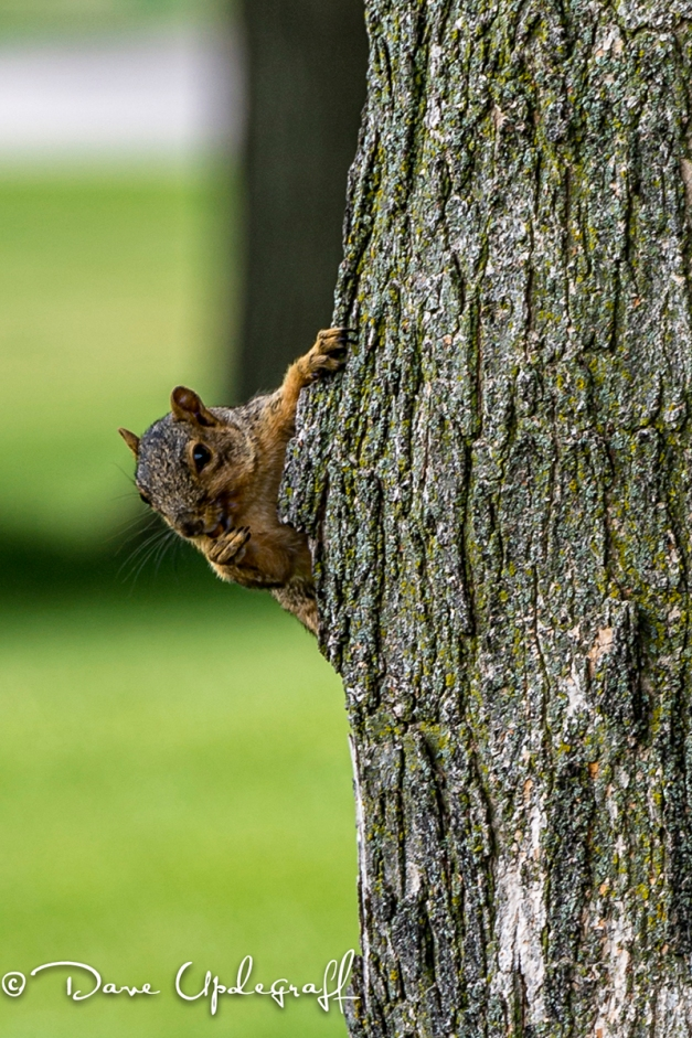 Still a Squirrel