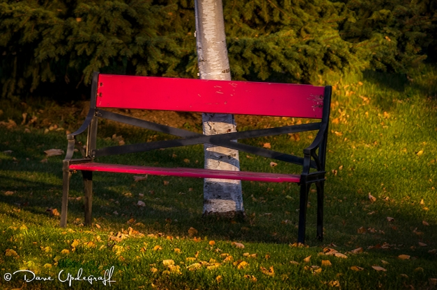 Just a red bench