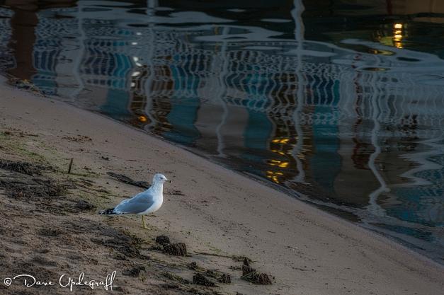 A gull explores