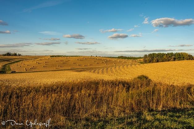 Just a Farm Scene