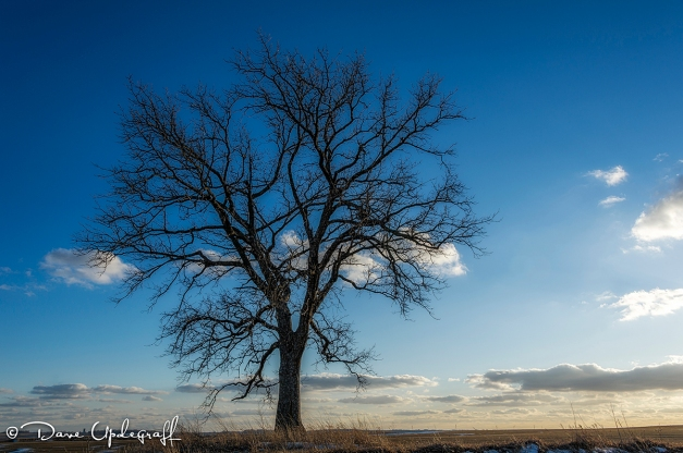 January Tree - 2013