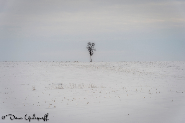A lone tree in the field