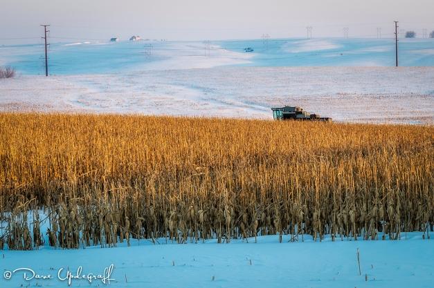 Combine in a corn field