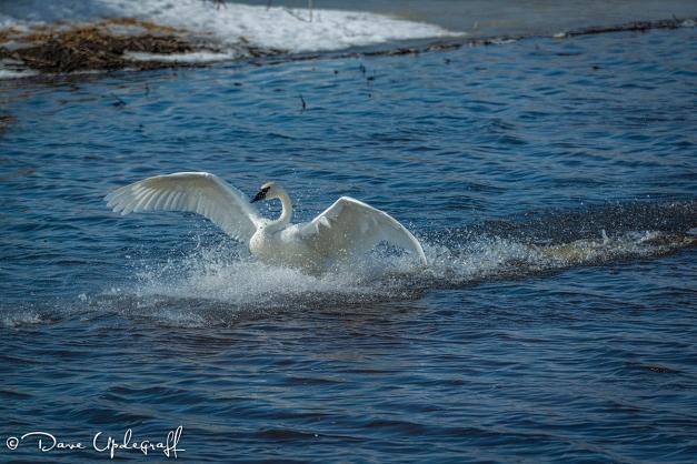 Triumphant Landing