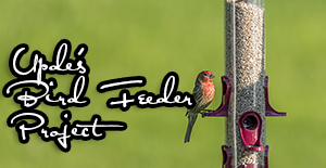 Visit My Bird Feeder Project