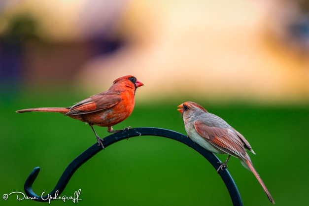 Mr. and Ms. Cardinal
