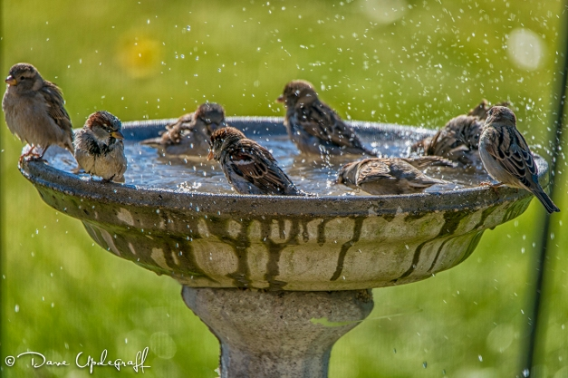 Birds Frolicking in the water